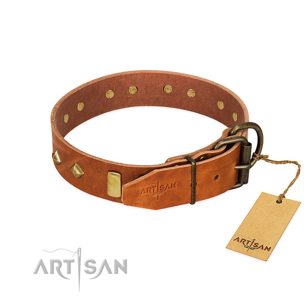Comfy wearing genuine leather dog collar with incredible embellishments
