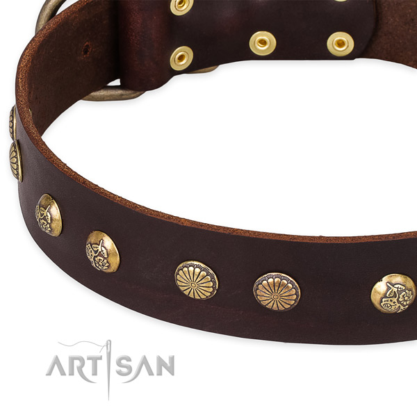 Leather collar with corrosion resistant fittings for your beautiful four-legged friend