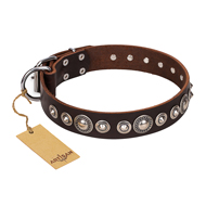 """Step and Sparkle"" FDT Artisan Glamorous Studded Brown Leather German Shepherd Collar"