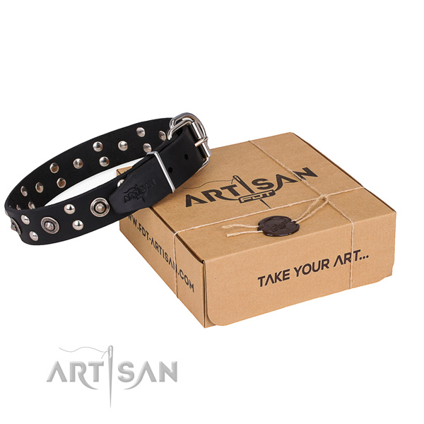 Daily walking dog collar with Awesome durable studs