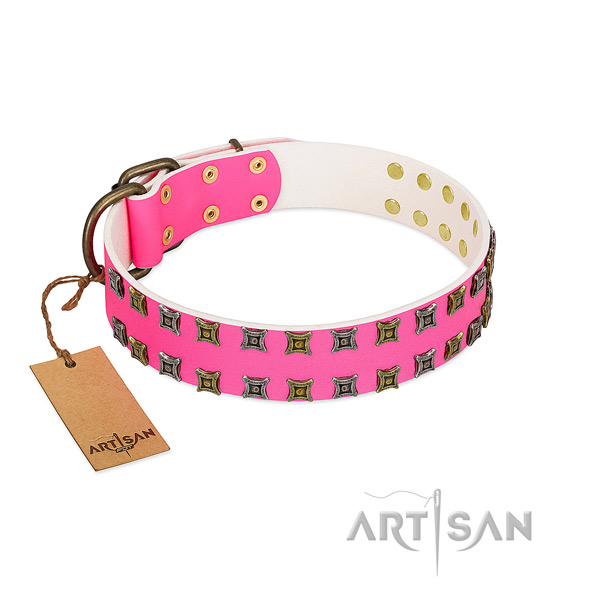 Leather collar with unique studs for your four-legged friend