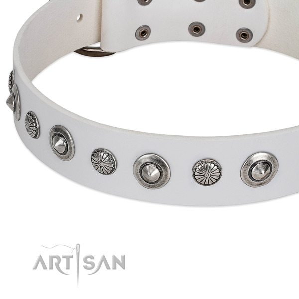 Full grain natural leather collar with strong fittings for your stylish four-legged friend