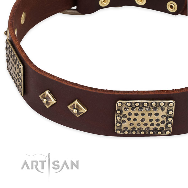 Corrosion proof studs on genuine leather dog collar for your canine