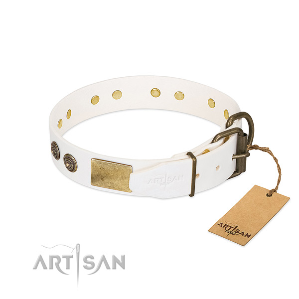 Reliable buckle on leather collar for stylish walking your canine