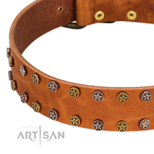 Daily walking full grain genuine leather dog collar with incredible embellishments