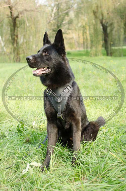 Absolutely Safe German Shepherd Dog Harness