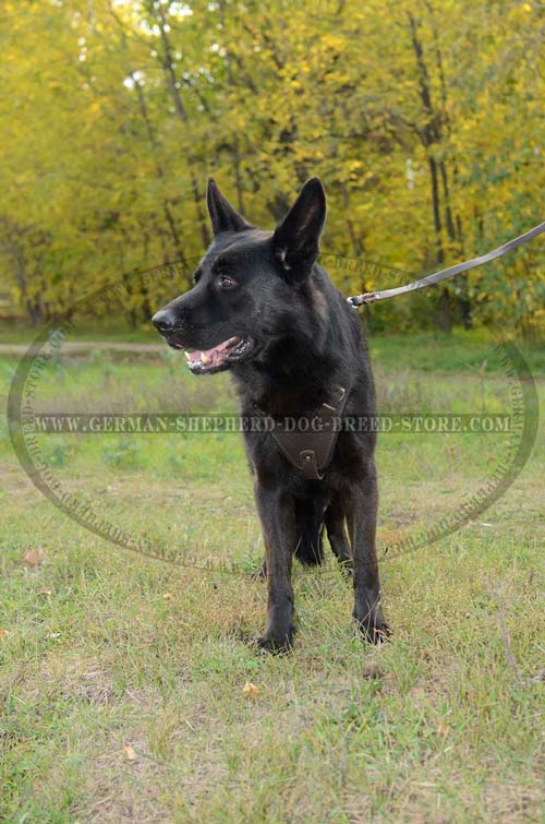 German Shepherd Dog Harness Designed For Training Purposes