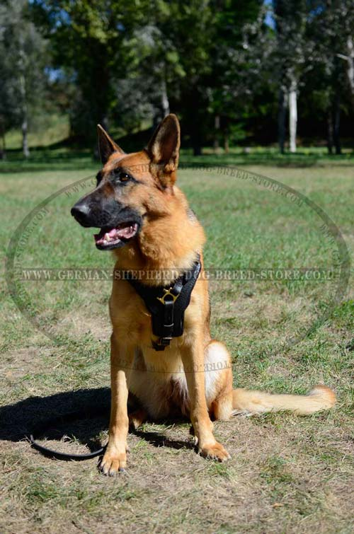 German Shepherd Harness For Free Movements