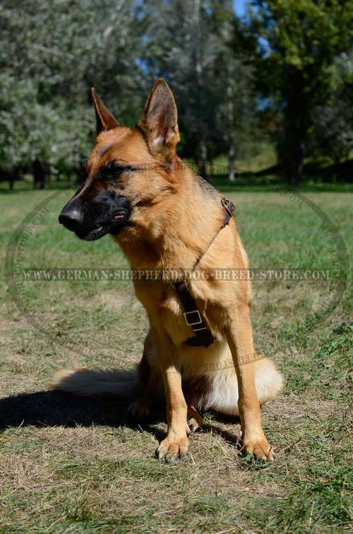 Dream German Shepherd Leather Harness