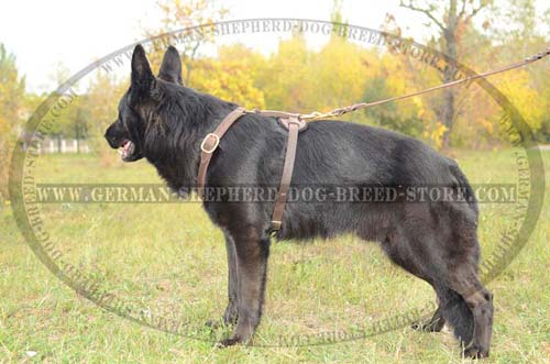 Unbelievable German Shepherd Dog Harness