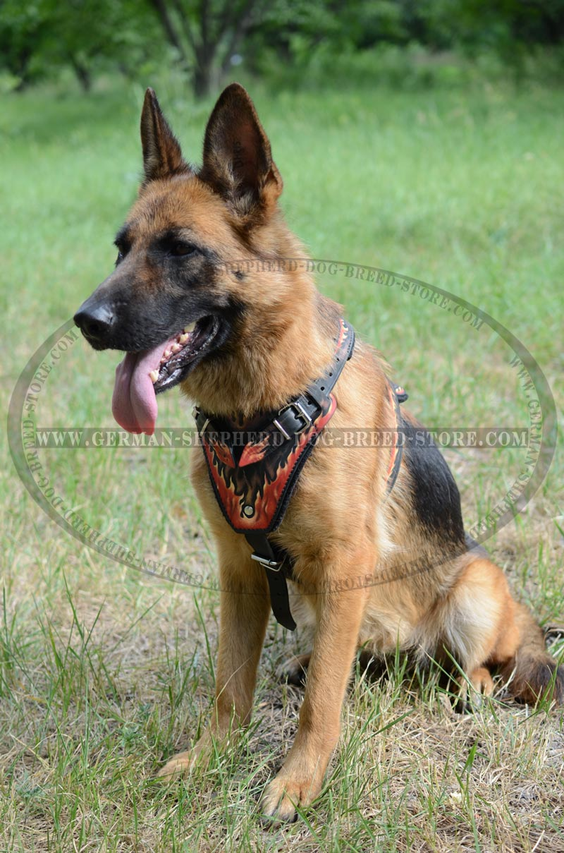 German Shepherd    Dog    Harness For Training And Walking  H1FL