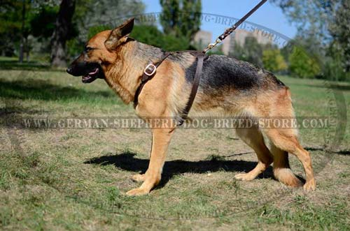 German Shepherd Dog Harness For Utter Comfort