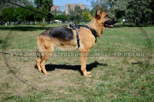 Remarkable German Shepherd Harness