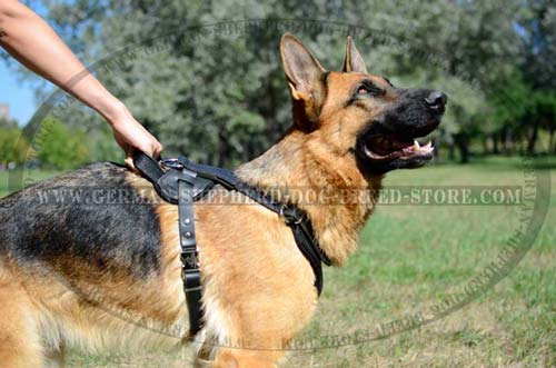 Precious Leather Harness For Your German Shepherd