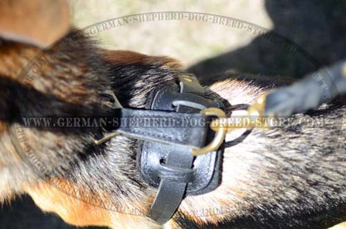 German Shepherd Harness Back Plate with Brass Ring for Leash Attachment