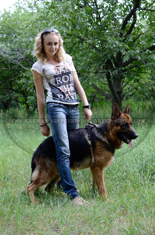 Walking Leather German Shepherd Harness Studded