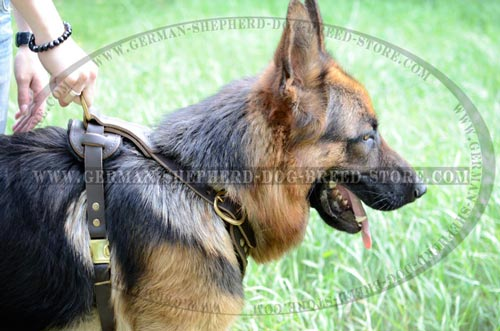 Leather German Shepherd Harness with Strong Brass Hardware