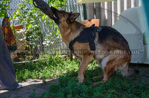 German Shepherd Harness Nylon For Working Dogs