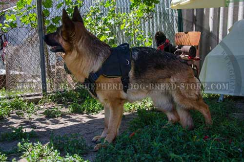 German Shepherd Harness Nylon With Chest Plate