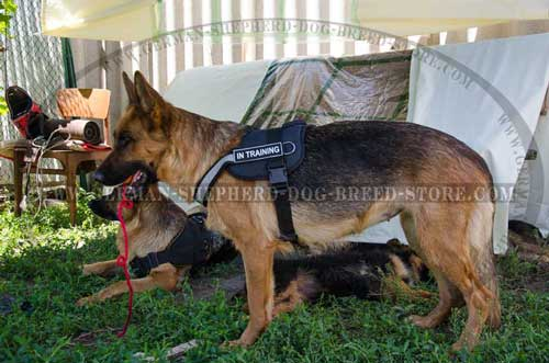 German Shepherd Harness Nylon Water-Resistant