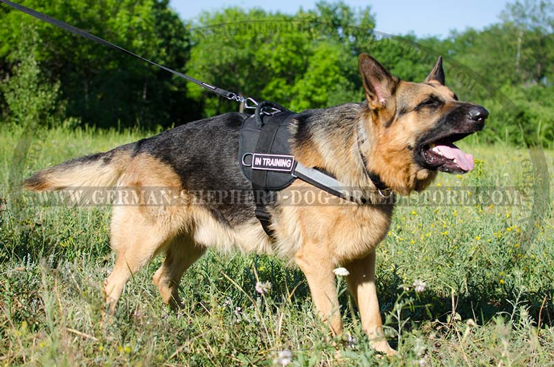 Multitasking All Weather German Shepherd Harness  H6p  1019 Nylon Harness With Reflective Front
