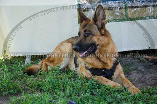 German Shepherd Harness Nylon For Agitation Training