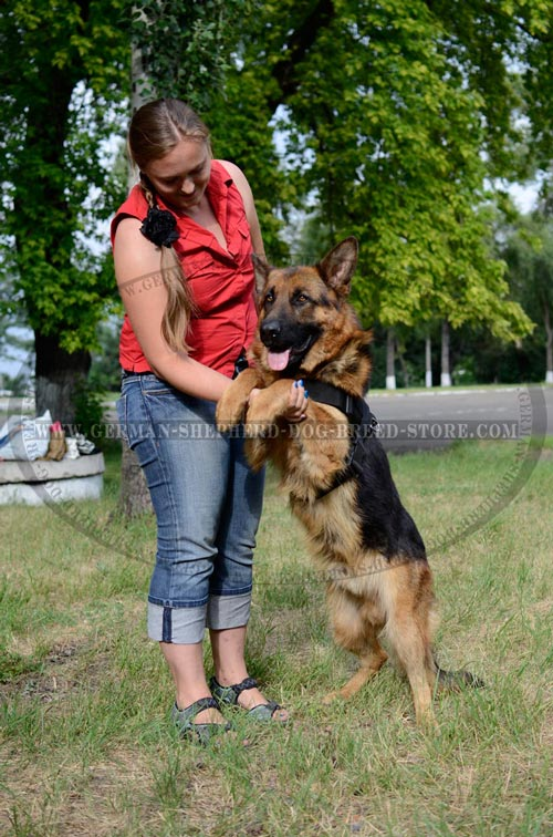 Nylon German Shepherd Harness for Walking and Training