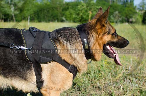 Nylon German Shepherd Harness with Comfortable Wide Back Plate