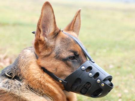 Everyday Leather Muzzle For German Shepherd