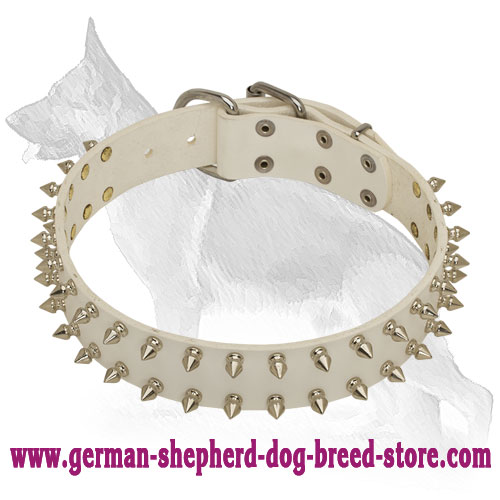 White Leather German Shepherd Collar with 2 Rows Nickel Plated Spikes