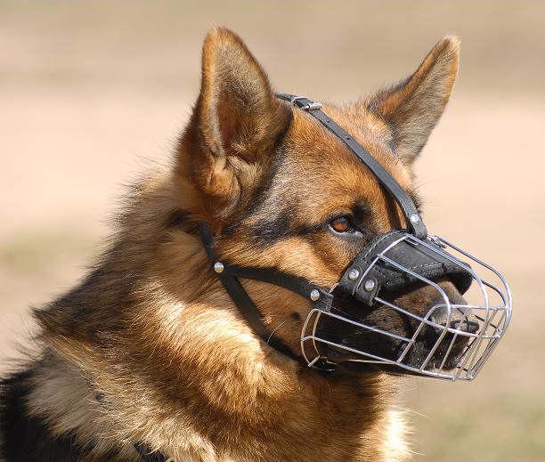 best wire dog muzzle