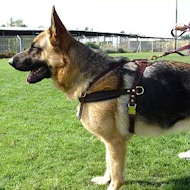 leather tracking dog harness, pulling dog harness for german shepherd