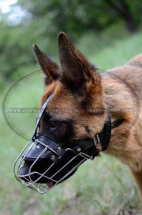 German Shepherd Perfect For Walks Muzzle
