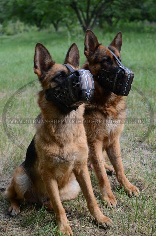 Astonishing German Shepherd Leather Muzzle