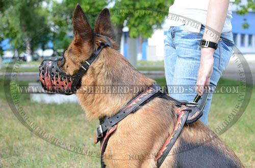 Walking German Shepherd Dog Muzzle