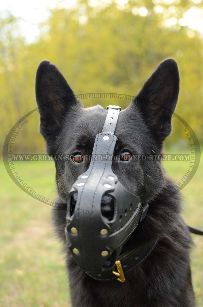 Hard Dogs Leather Working Muzzle [M56##1019 Leather Muzzle] : German ...