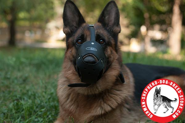 Multifunctional Leather Muzzle with Padded Nose Zone