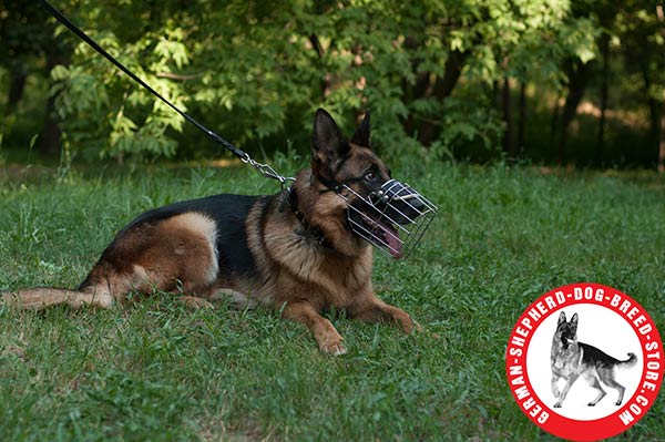 German Shepherd Wire Cage with Perfect Ventilation