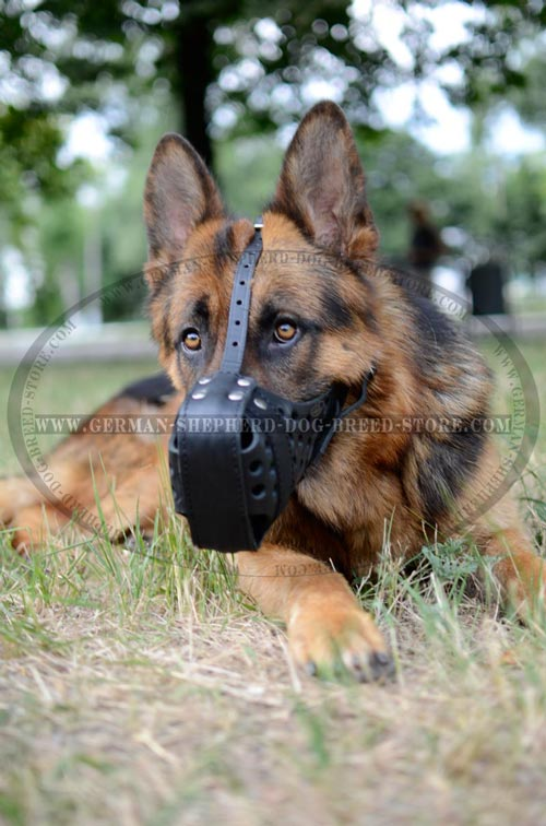 Durable And Secure Leather German Shepherd Muzzle